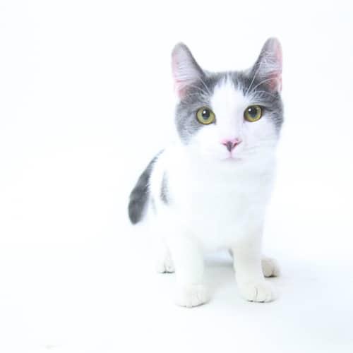Centauri – Adopted