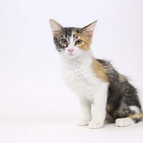 Daisy – Adopted