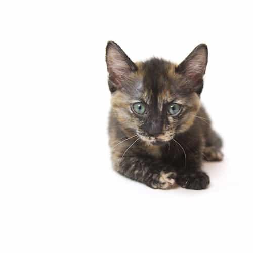 Kali – Adopted