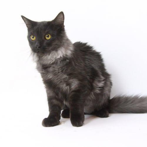 Mercury – Adopted