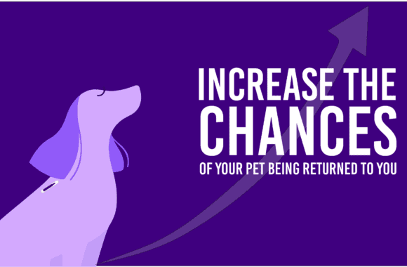 Protect Your Pet – Prevent Your Pet From Getting Lost