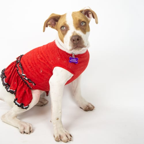 Bailey – Adopted