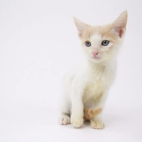 Phineas – Adopted