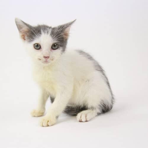 Quinn – Adopted