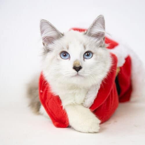 Kristoff – Adopted