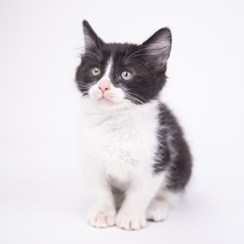 Maverick – Adopted