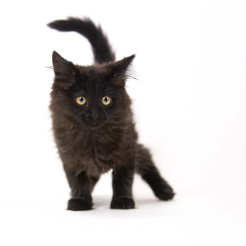 Hindley- Adopted