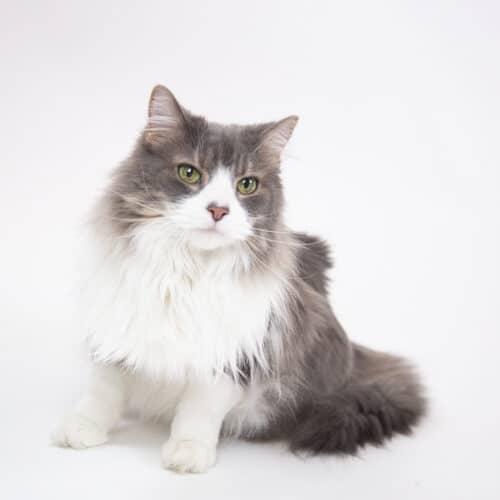 Bonita – Adopted