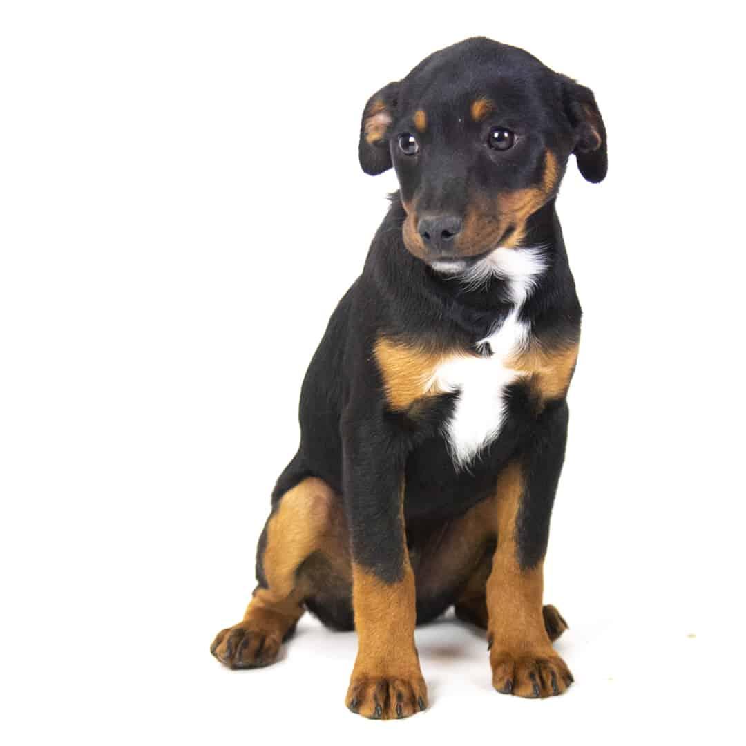 puppyA (1 of 1)